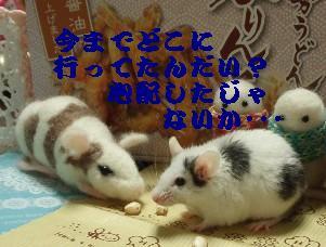 20140125no5.jpg