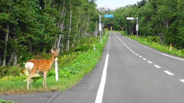 905別当賀付近道道1142号鹿_convert_20120912111406