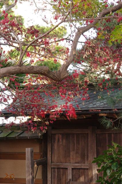 20131201旧下田邸12