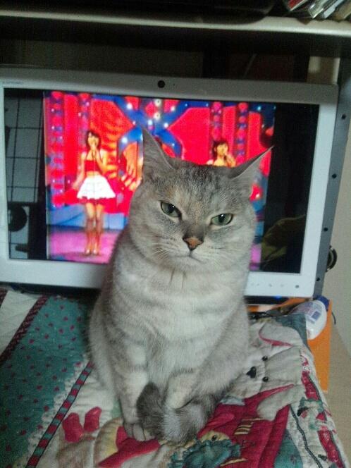 fc2blog_2012121220210656d.jpg