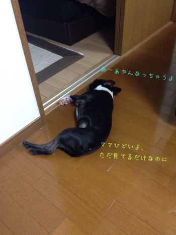 fc2blog_20140118102047643.jpg