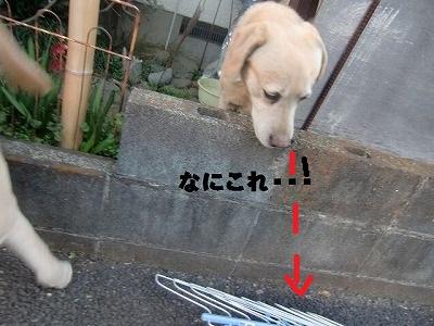 CIMG9151_20130312212717.jpg