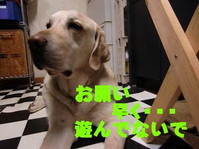 CIMG9230_20130412134617.jpg