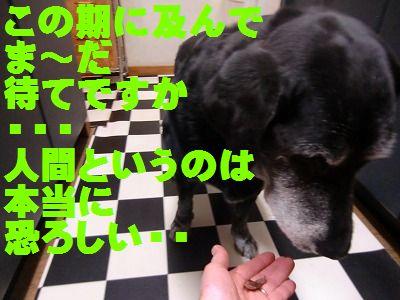 CIMG9235_20130412134640.jpg