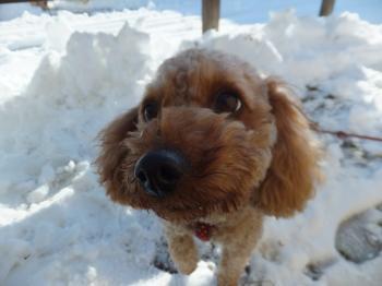 雪だねっ!