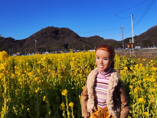 nanohana-20140119-01s.jpg