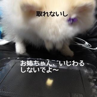 fc2blog_20131205191232ddc.jpg