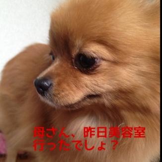 fc2blog_201312121232190e4.jpg