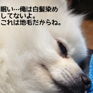 fc2blog_20131212130746309.jpg