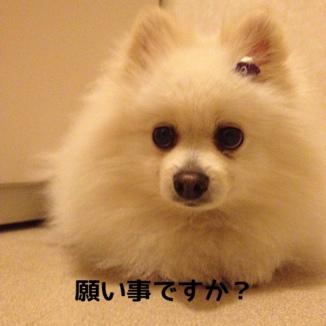 fc2blog_201312132138270e4.jpg