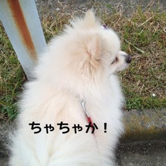 fc2blog_20131215175051e96.jpg