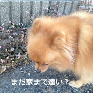 fc2blog_201312151753213d6.jpg