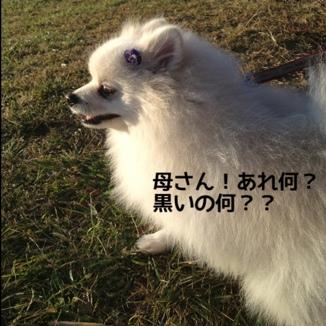 fc2blog_20131218173653998.jpg