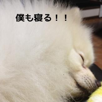 fc2blog_20131220195520dd6.jpg