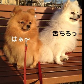 fc2blog_201312212033240ee.jpg