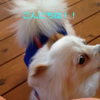 fc2blog_20131228182933d71.jpg