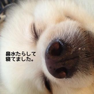 fc2blog_20140106221213f89.jpg