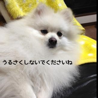 fc2blog_20140112190706e00.jpg