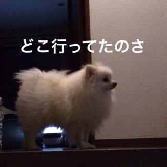 fc2blog_2014012221460738d.jpg