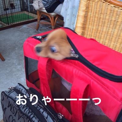 fc2blog_2014012919554316b.jpg
