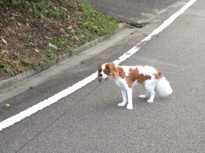 fc2blog_20120720194559391.jpg