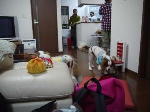 fc2blog_2012120822320334e.jpg