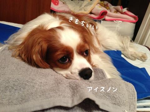 fc2blog_2013051801032631e.jpg