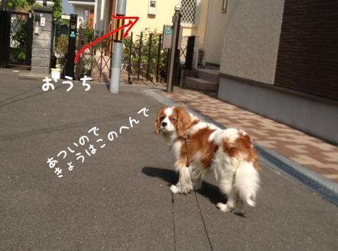 fc2blog_2013052222422703a.jpg