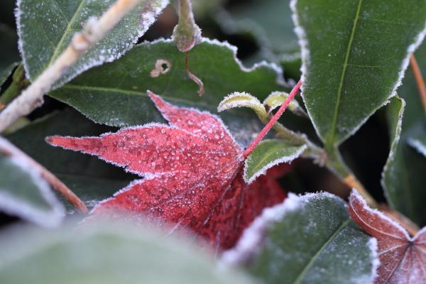 2012-11-25_0431.jpg