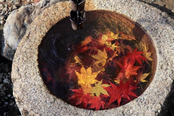 2012-11-25_0806.jpg