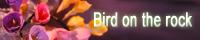 Bird_on_the_rock_web