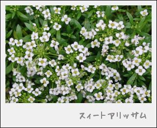 aaIMGP4692.jpg