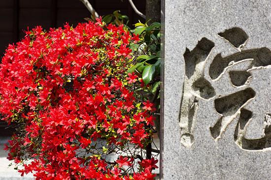 妙興寺-9