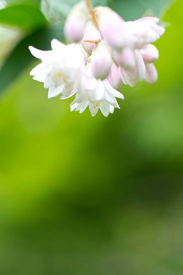 植物園雨-3