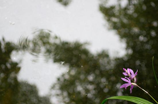 植物園雨-4