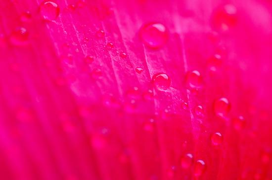植物園雨-6