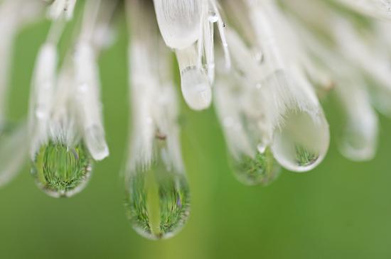 雨の植物園-2