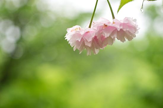雨の植物園-5