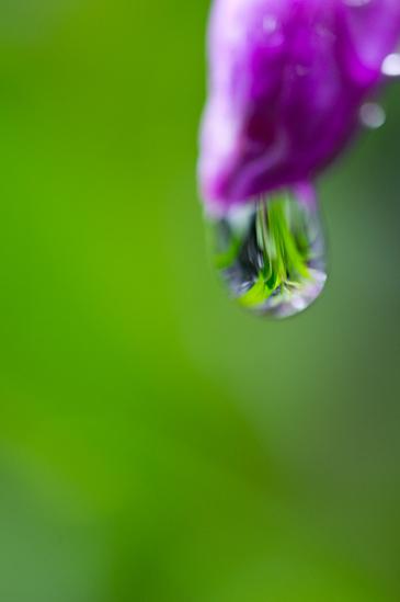 雨の植物園-9