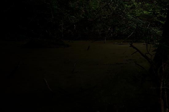 海上の森-2