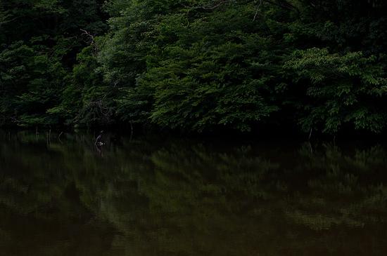 海上の森-3