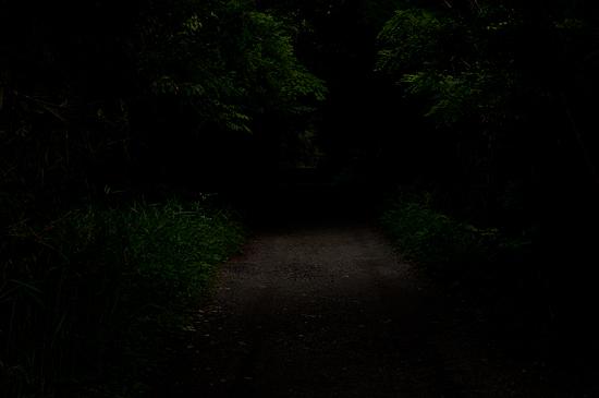海上の森-4