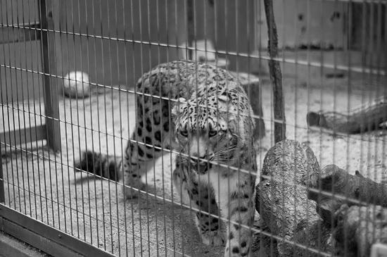動物園1-7