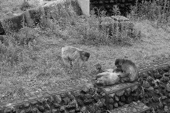 動物園延長-1