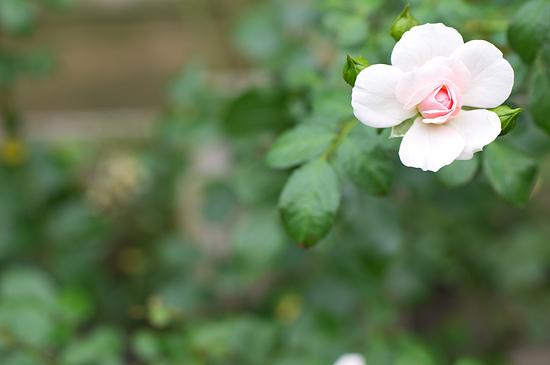 植物園便り-5