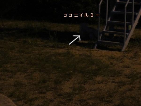 201208222211551b62.jpg