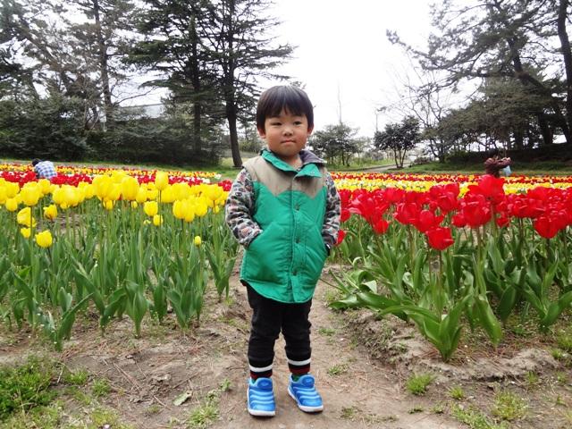 寺尾中央公園のチューリップ前でお写真