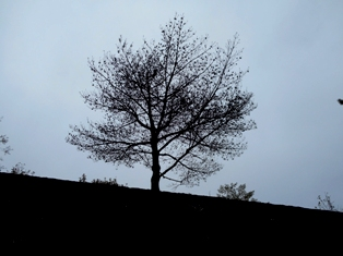 画像 013 (2)
