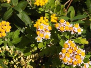 my-garden 063