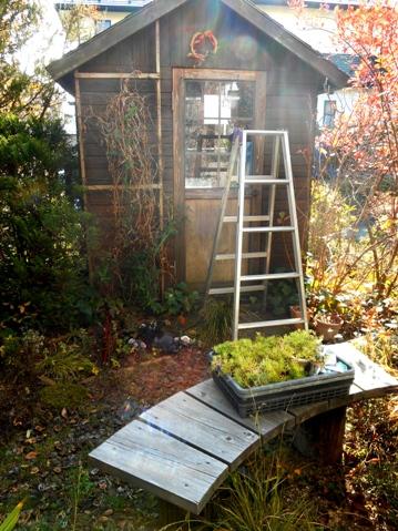 my-garden 001 (5)